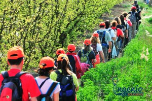 Excursiones - Ingenio Educativo